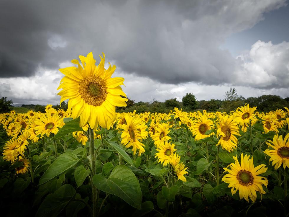 PDI - Field of Hope by Paul McIlwaine (9 marks)