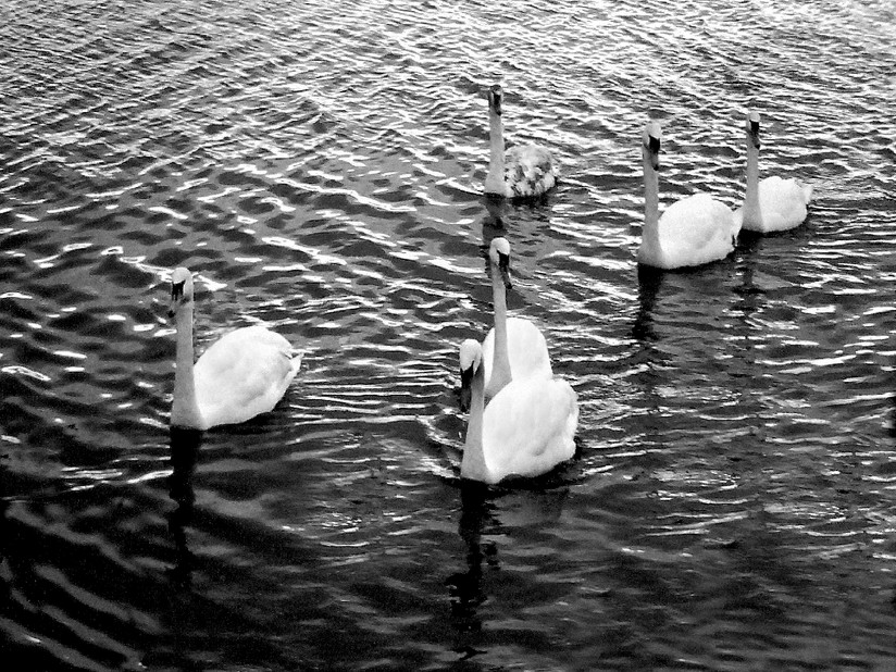 MONO - Swan Lake by Eddie Stone (6 marks)