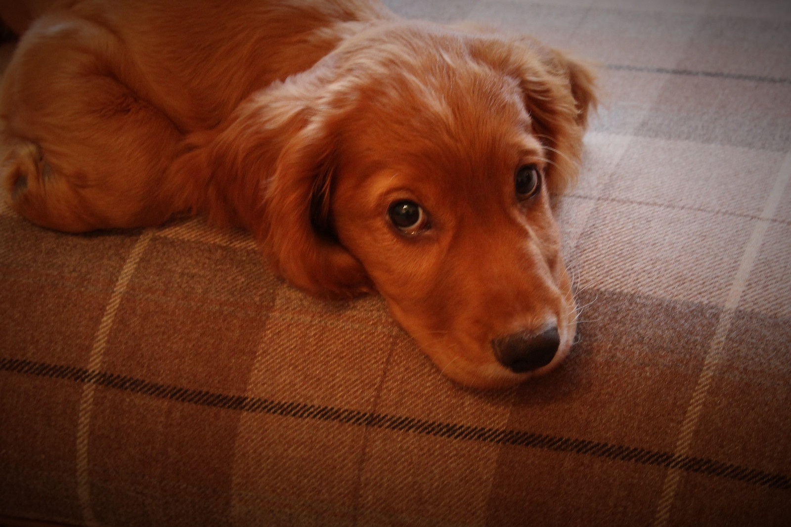 PDI - Puppy Love - Paul Anka by John Knipe (9 marks)