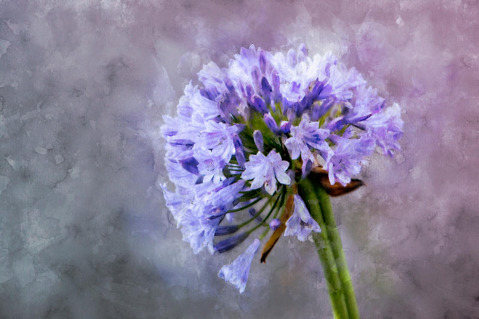 Pinted Flower