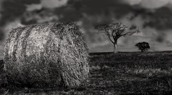 The Tree_BNDCC_2013_Angus Gardner.jpg
