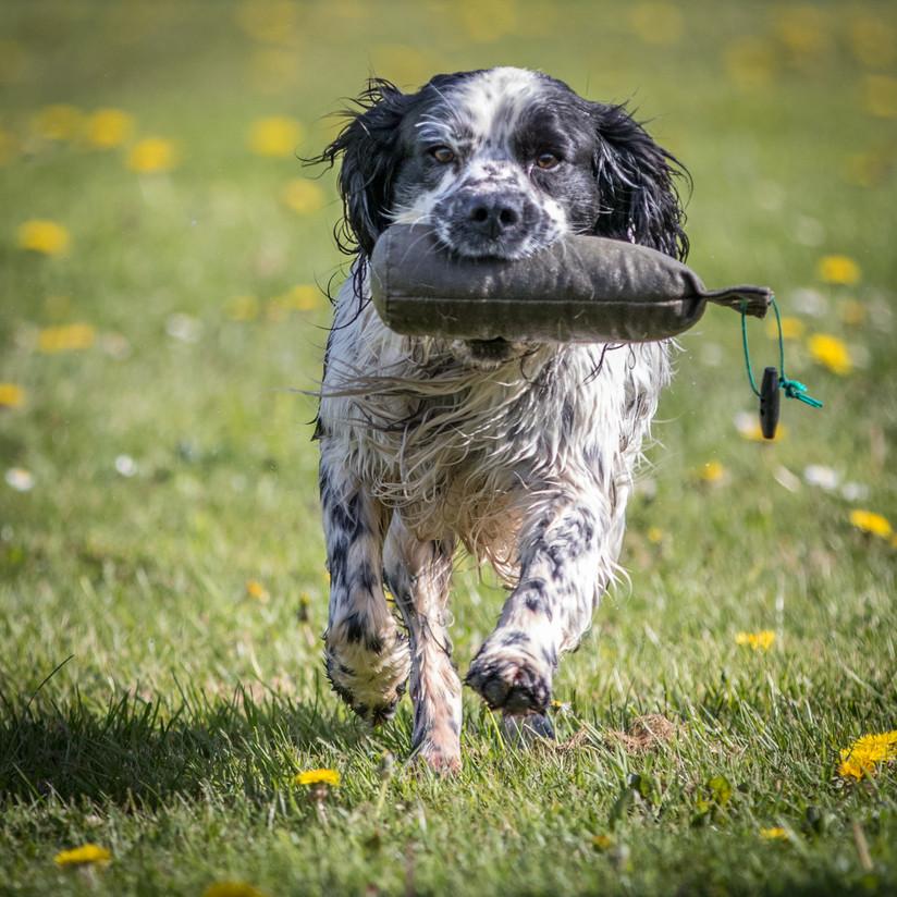 PDI - Fetch by Frances Price (10 marks)
