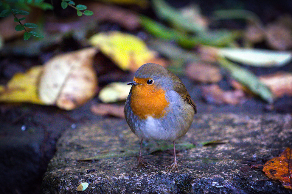 PDI - I am Robin by sean mcaliskey (10 marks)