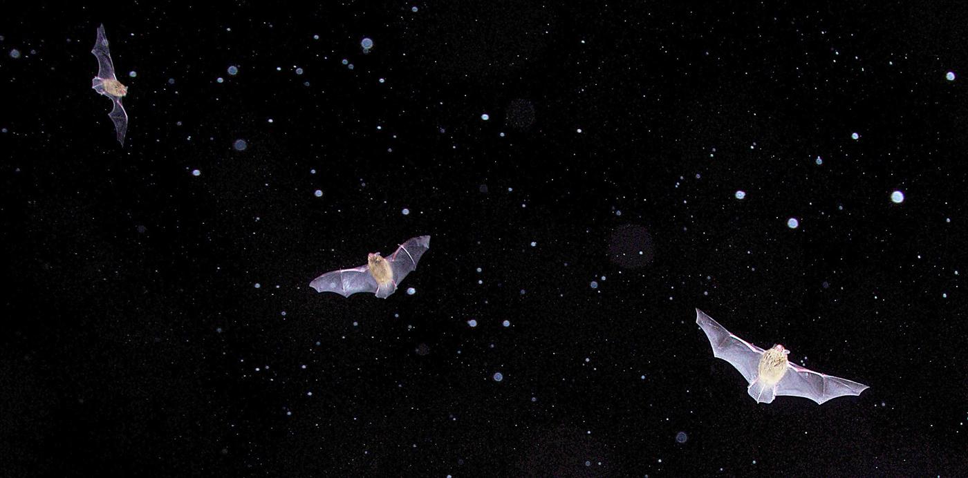 Bats in the rain..jpg