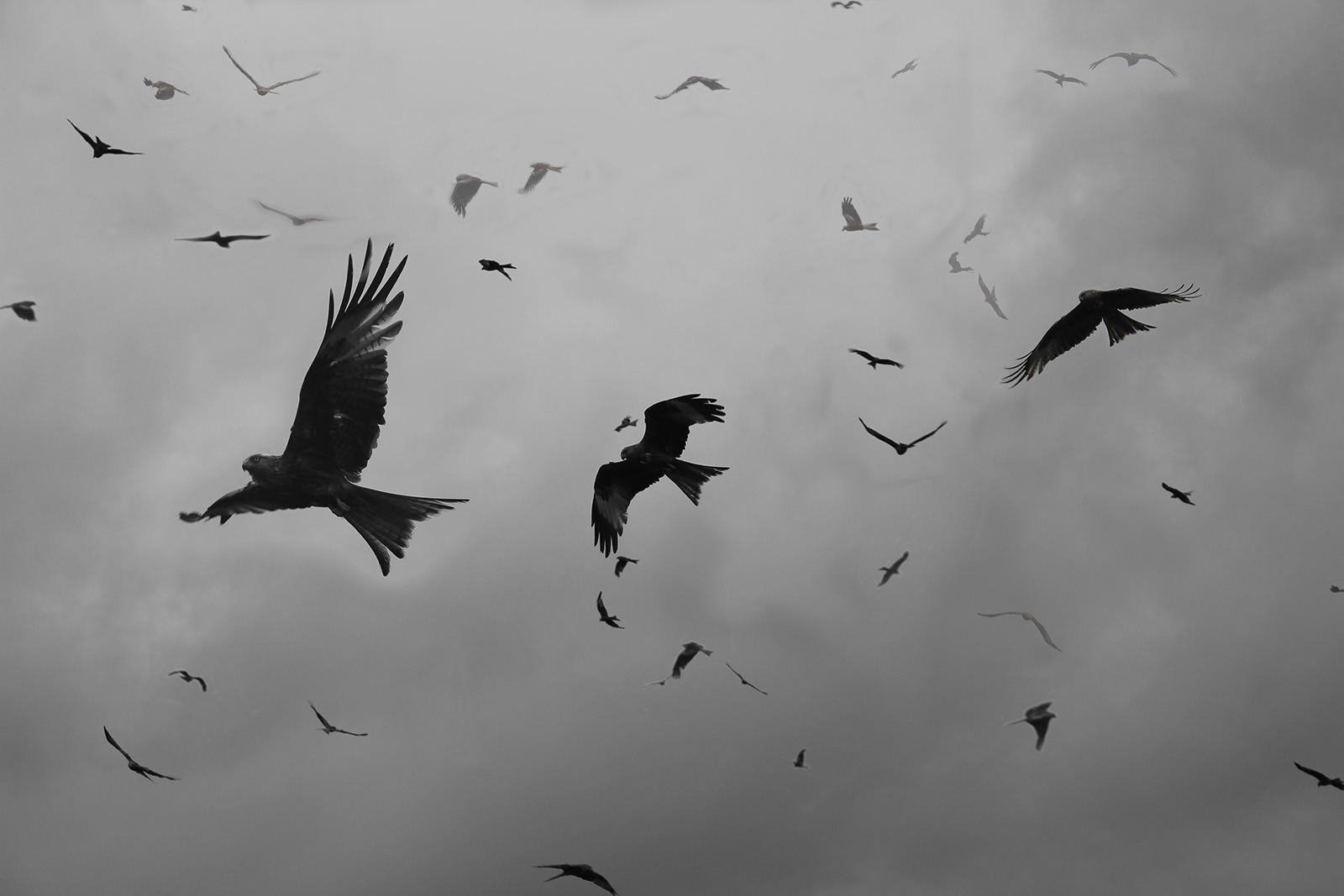 MONO - The Birds - Daphne du Maurier by Jennifer James (10.5 marks)