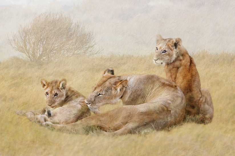 COLOUR - Family Group by Laurie Campbell (15 marks)