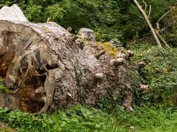 127 Nature taking over mans destruction.jpg