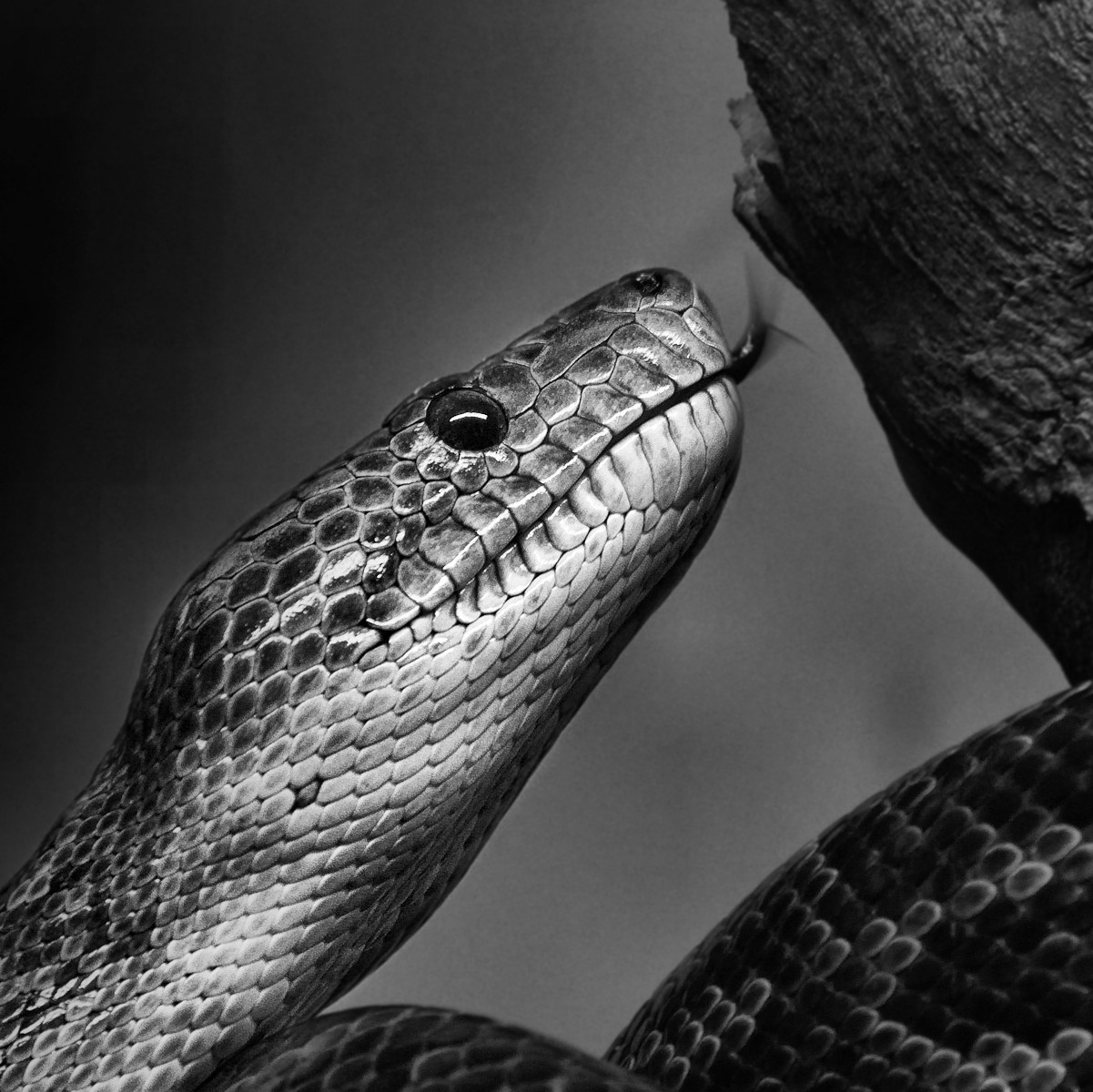 MONO - Snake by Fiona Beattie (10 marks)