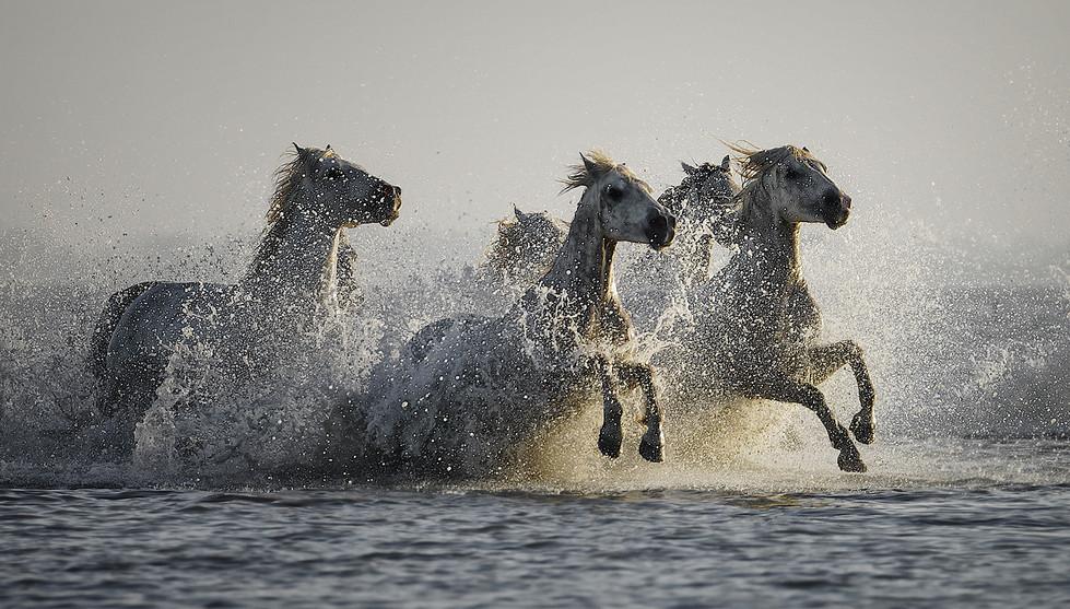 PDI - White Horses - Jackie Lee by Jennifer Willis (11 marks)