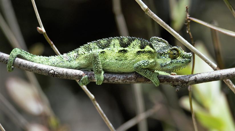 PDI - Chameleon by Seamus O'Neill (9 marks)