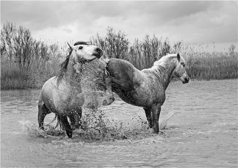 MONO - Stallion Back Kick by David Edwards (17 marks)