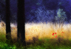 Colour Prints - Starred Image