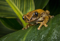 COLOUR - Tree Frog by Terry Hanna (13 marks)