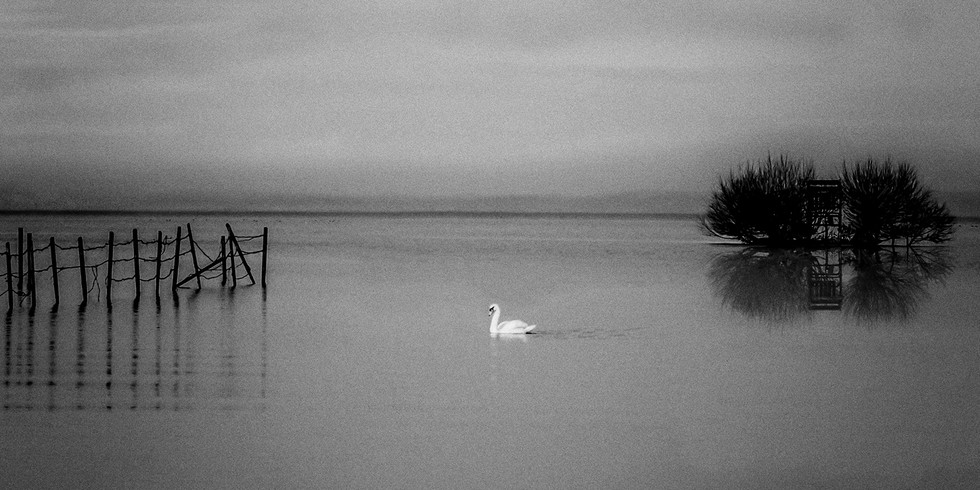 MONO - Swan Lake by John Lambe (10 marks)