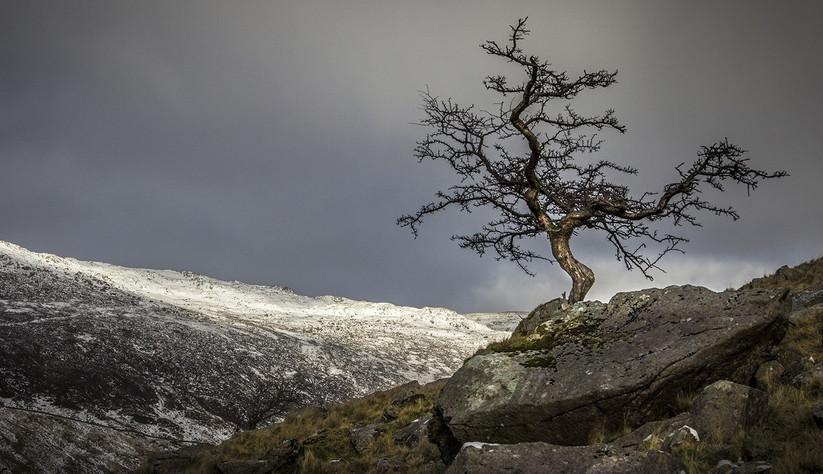 COLOUR - Hawthorn on Siabod by Iona O'Neill (17 marks)