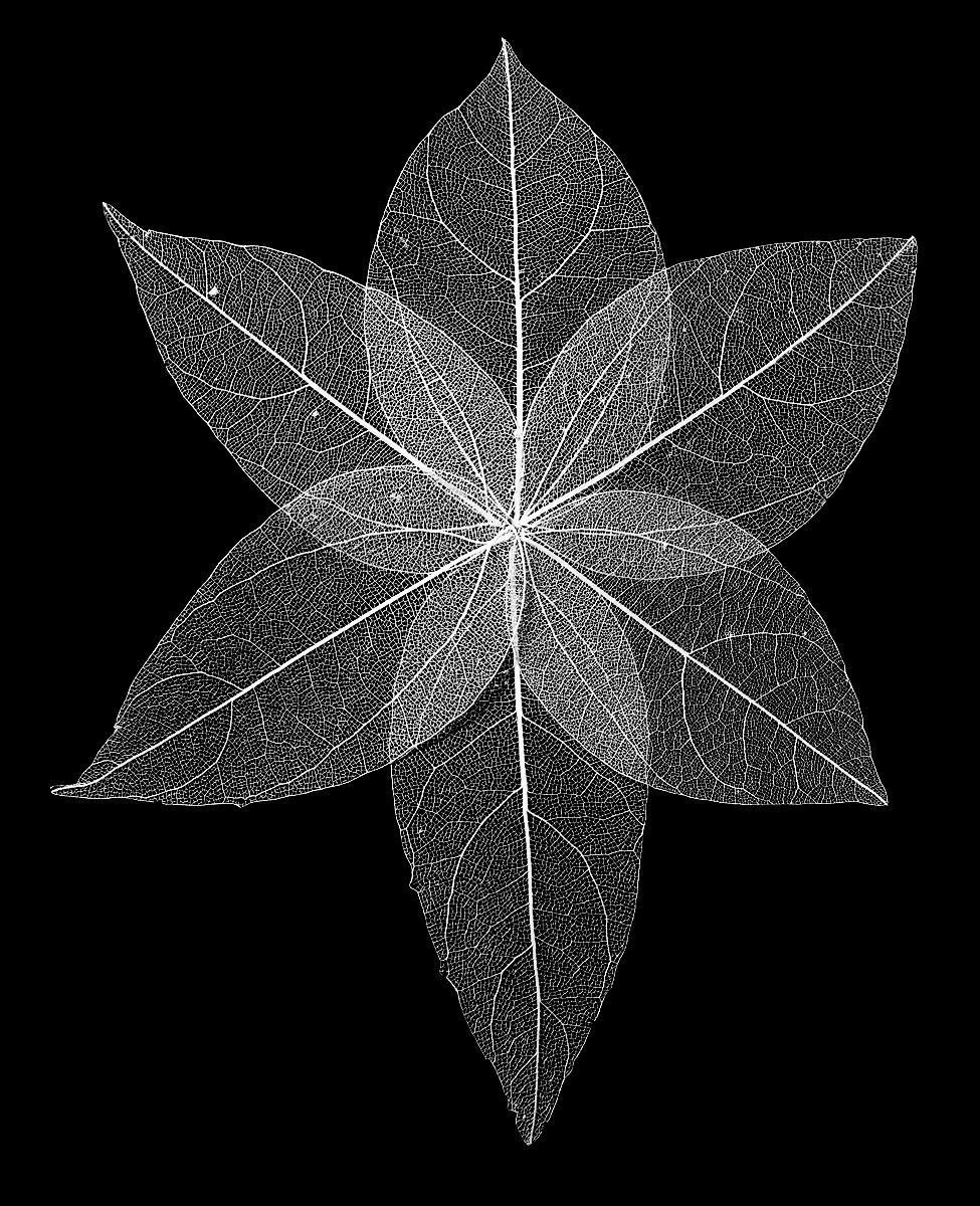 PDI - Skeleton Leaves by Steve Stewart (12 marks)