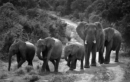 2 - NIPA - African roadblock by Alan Hillen ( 32 marks )