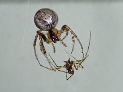 103 spiderfight.jpg