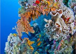C31_R4_Colourful_Coral_Alan_Cranston_CCC_fs.jpg