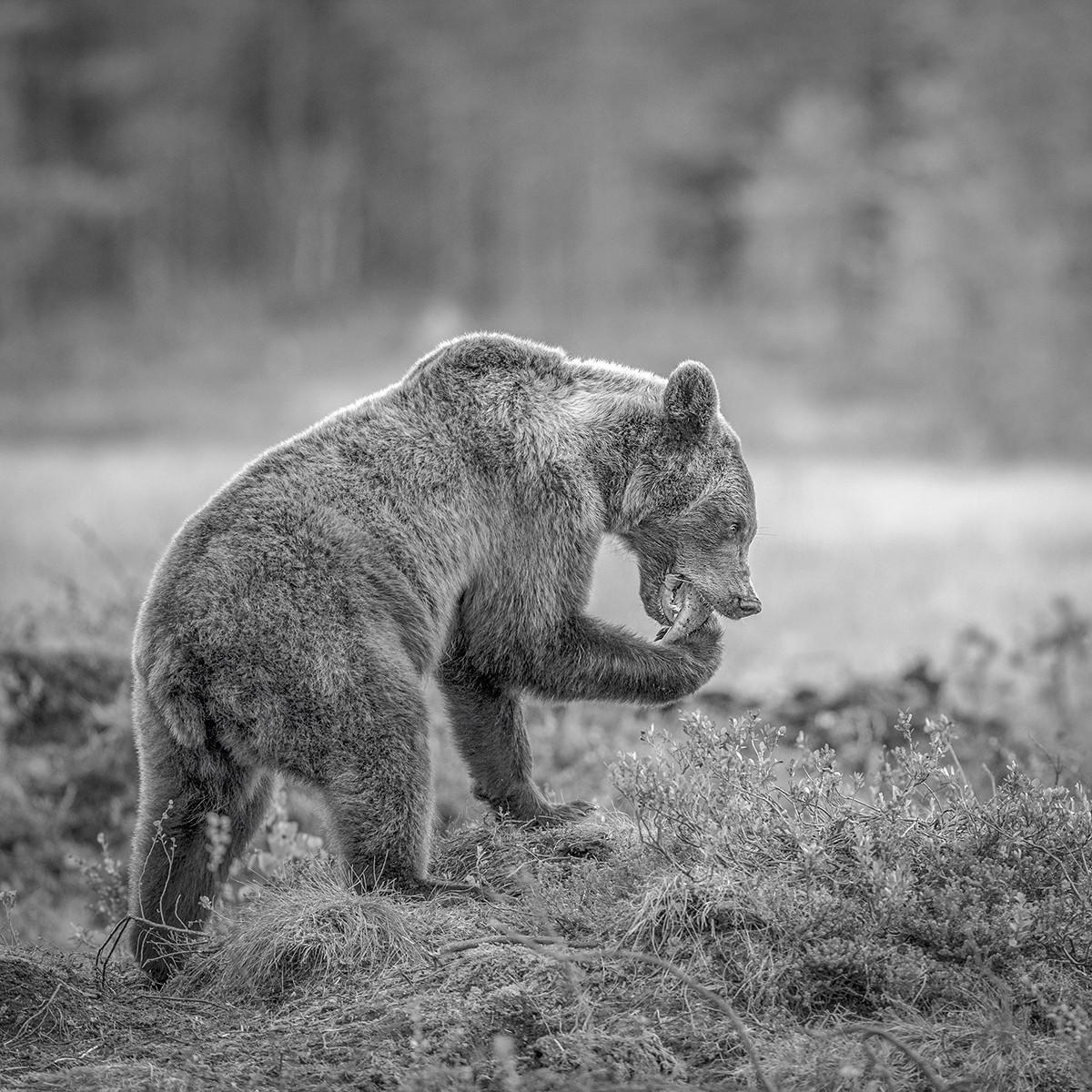 MONO - Little Brown Bear by Pamela Wilson (12 marks)