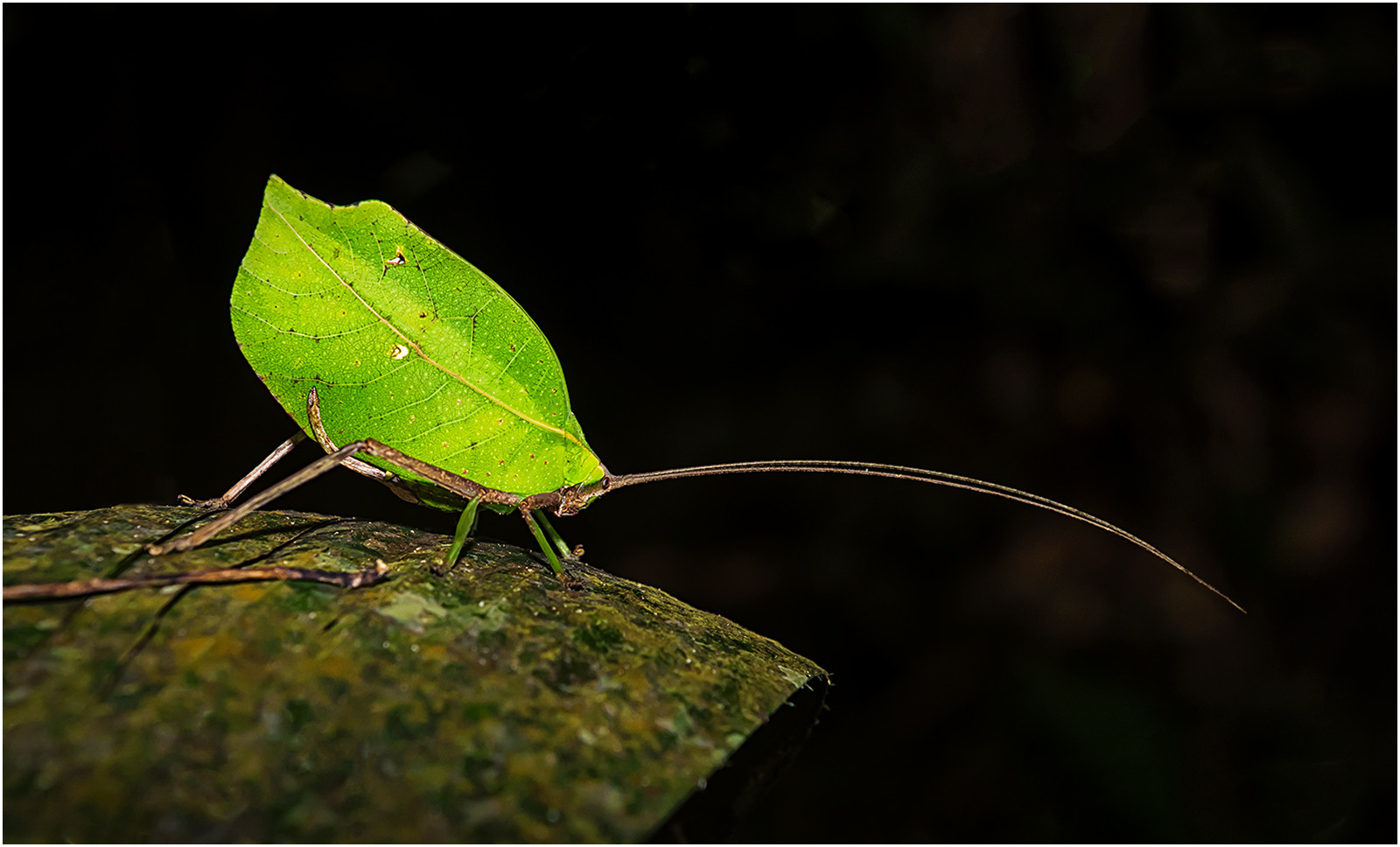 PDI - Leaf Mimic Insect by Brendan Hinds (13 marks)