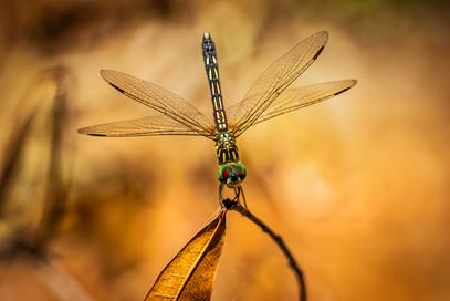 """Bugs Eye View"" by Steve Haydon (15 marks)"