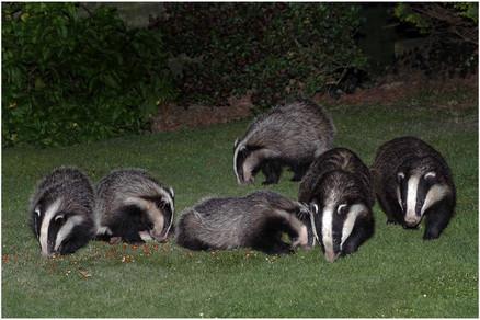 P-NIPA-EX17-PDI-089-Badgers' Night Out-John McDonald-NIE.jpg