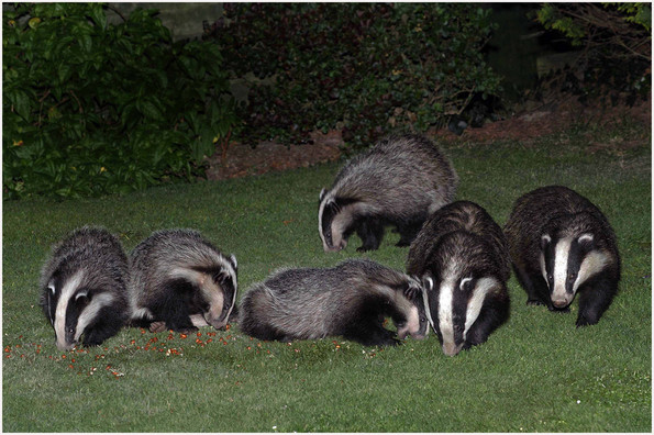 P-NIPA-EX17-PDI-089-Badgers' Night Out-John McDonald-NIE.jpg