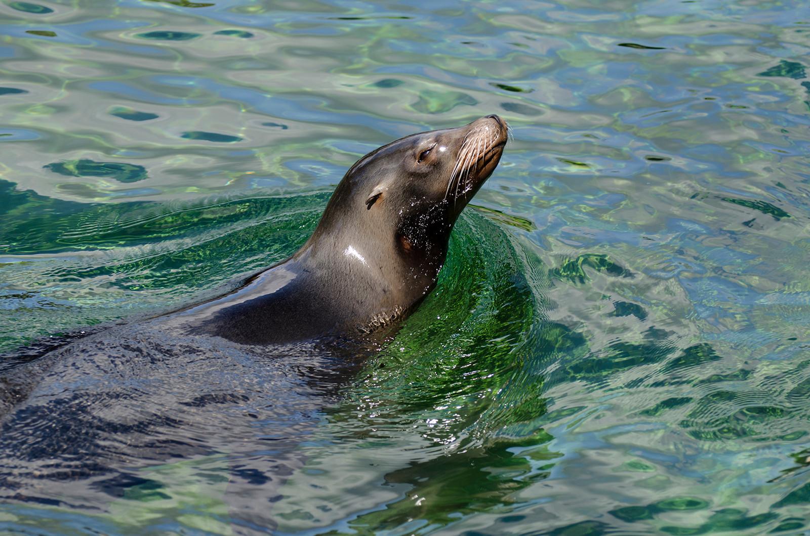 PDI - Sea Lion by Mary Harkin (9 marks)