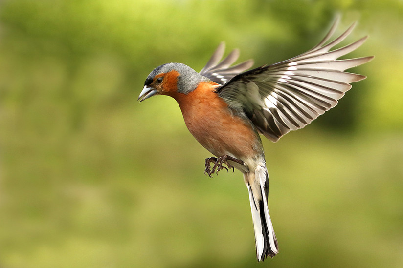 COLOUR - Coming in to Land by Robert Graham (11 marks)