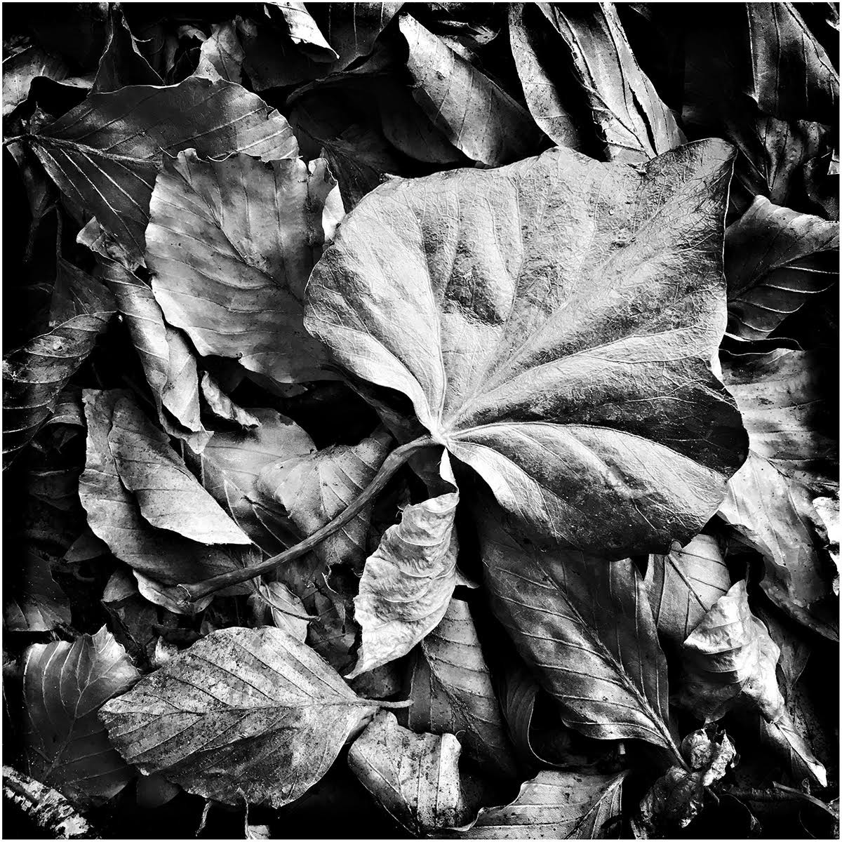 PDI - Fallen Leaf by Anita Kirkpatrick (8 marks)