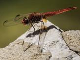 PDI - Bug by Tom Dalzell (8 marks)