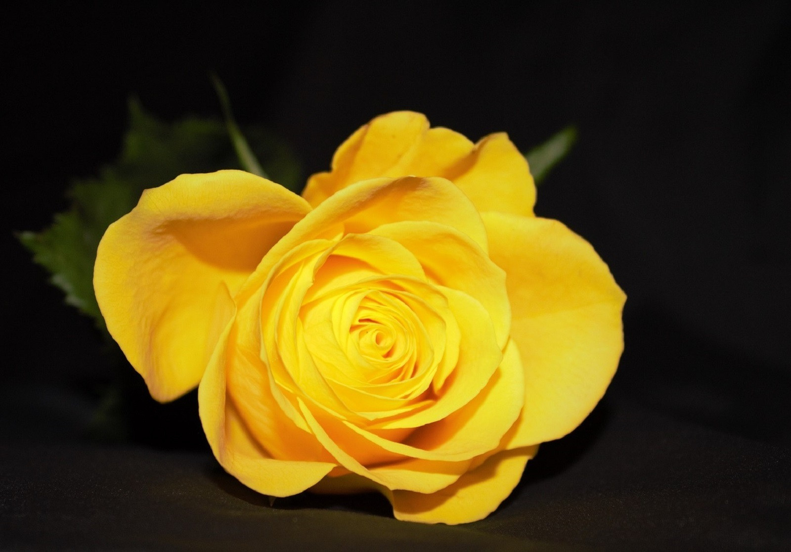 PDI - Yellow Rose by Donna Boyd (9 marks)