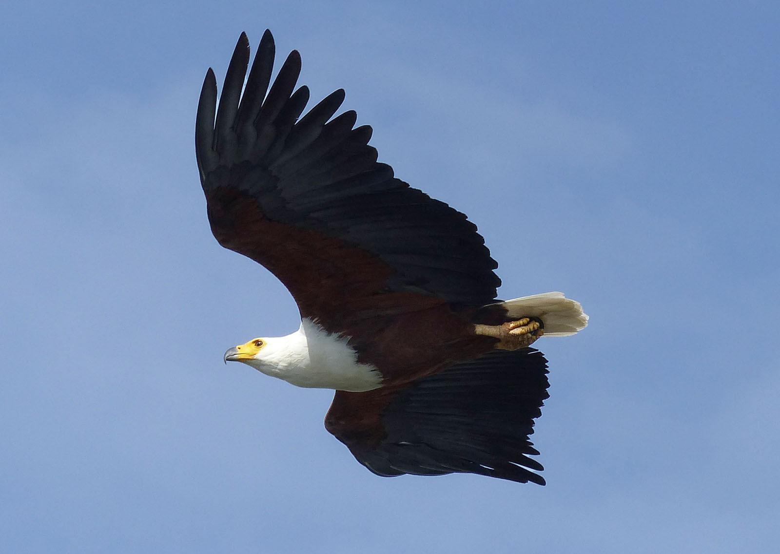PDI - Fly Like An Eagle - Steve Miller Band by Alison Cowan (12 marks)