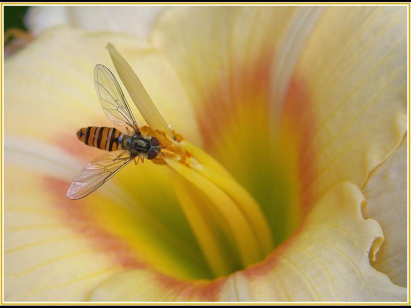 PDI - Hoverfly by Chris Blyth (14 marks)