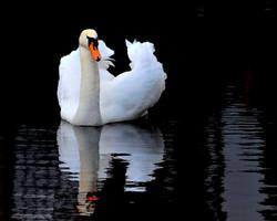 119 swan lake.jpg