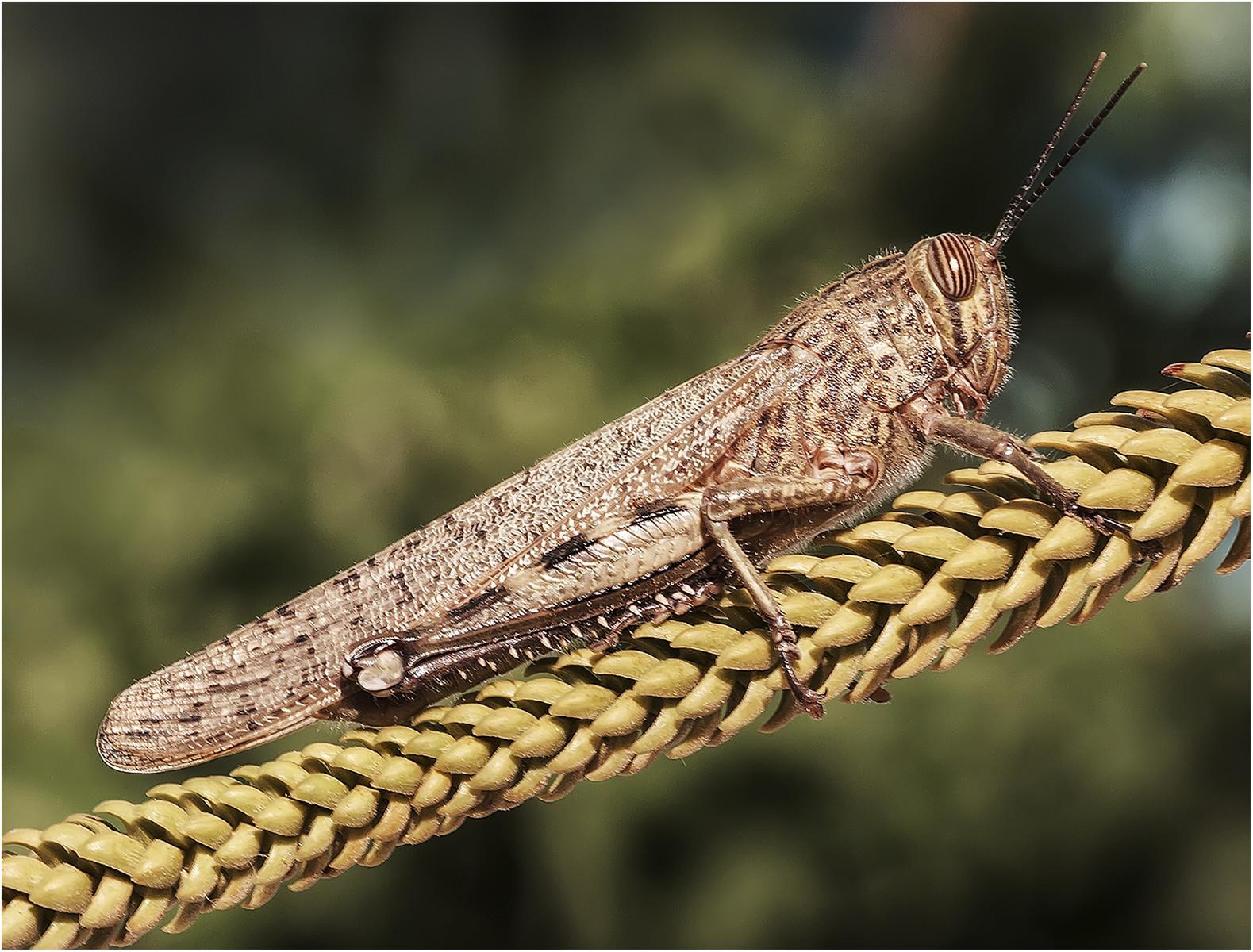 PDI - Locust by Stephen McWilliams (10 marks)