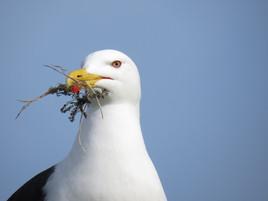 PDI - Sea Gull Nesting by Eileen O.Rourke