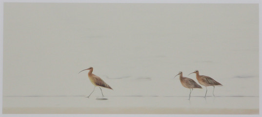 """""""Curlews"""" by Laurie Campbell"""