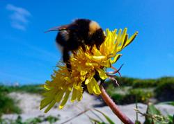 125 Bee.jpg