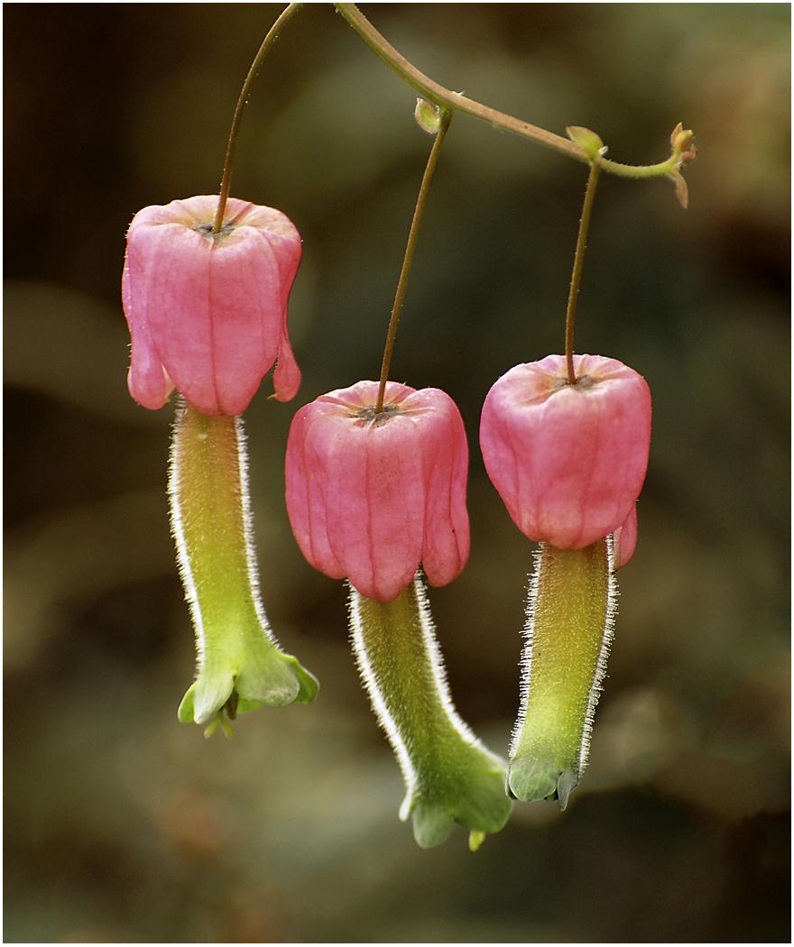 161_012Andes Flower.jpg
