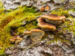 128 Not Mushroom.jpg