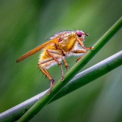 PDI - Fly Close-Up by Vittorio Silvestri