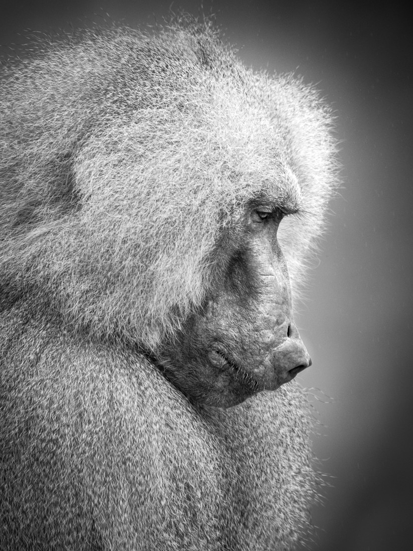 PDI - In Deep Thought by Chris Andrews (9 marks)