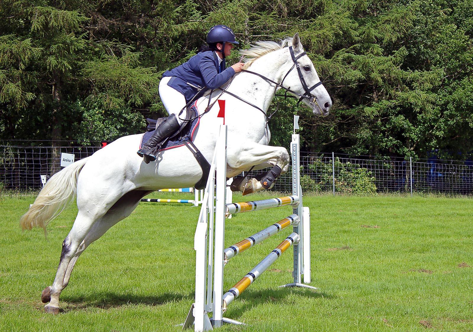COLOUR - The Horse Whisperer - Nicholas Evans by Seamus O'Neill (8 marks)