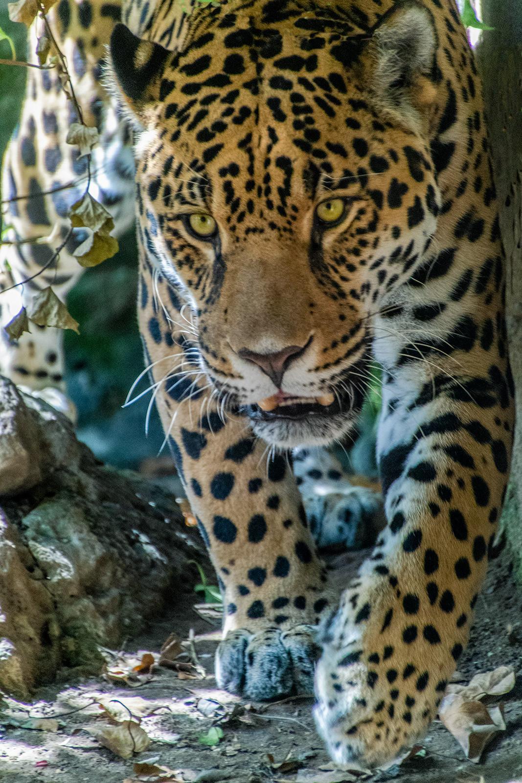 PDI - On the Prowl by Iris Rainey (11 marks)