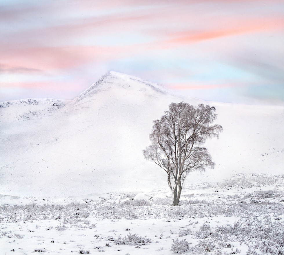 COLOUR - Pink Dawn by Gavin Forrest (16 marks)