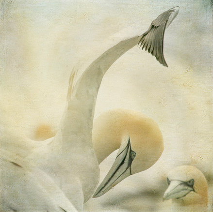 """""""Under My Wing"""" by Laurie Campbell"""