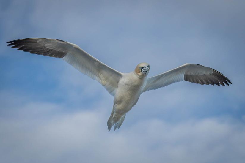 PDI - Free Bird - Lynyrd Skynyrd by Frances Price (11 marks)