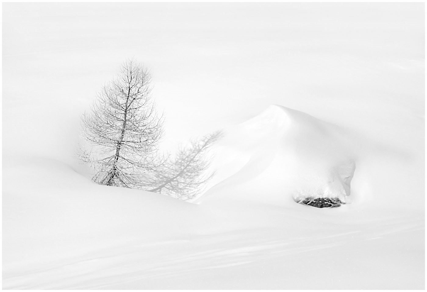 MONO - Tree and Snowdrift by Tom Dodd (17 marks)